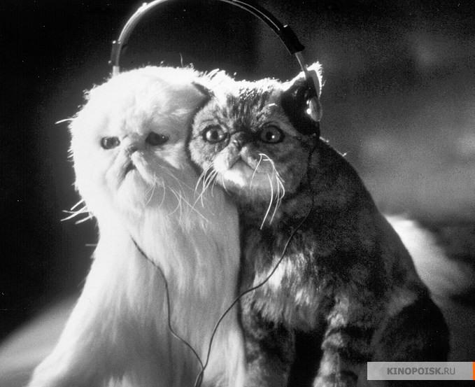 «Кошки Против Собак» — 2001
