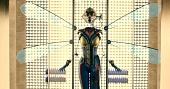 Человек-муравей 2015 кадры