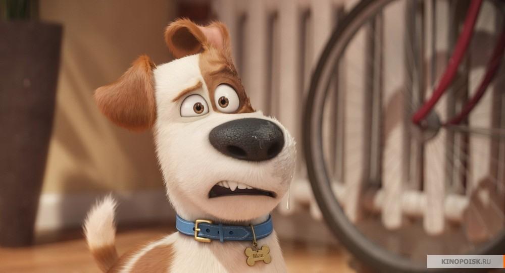 кадр №1 из фильма Тайная жизнь домашних животных (2016)
