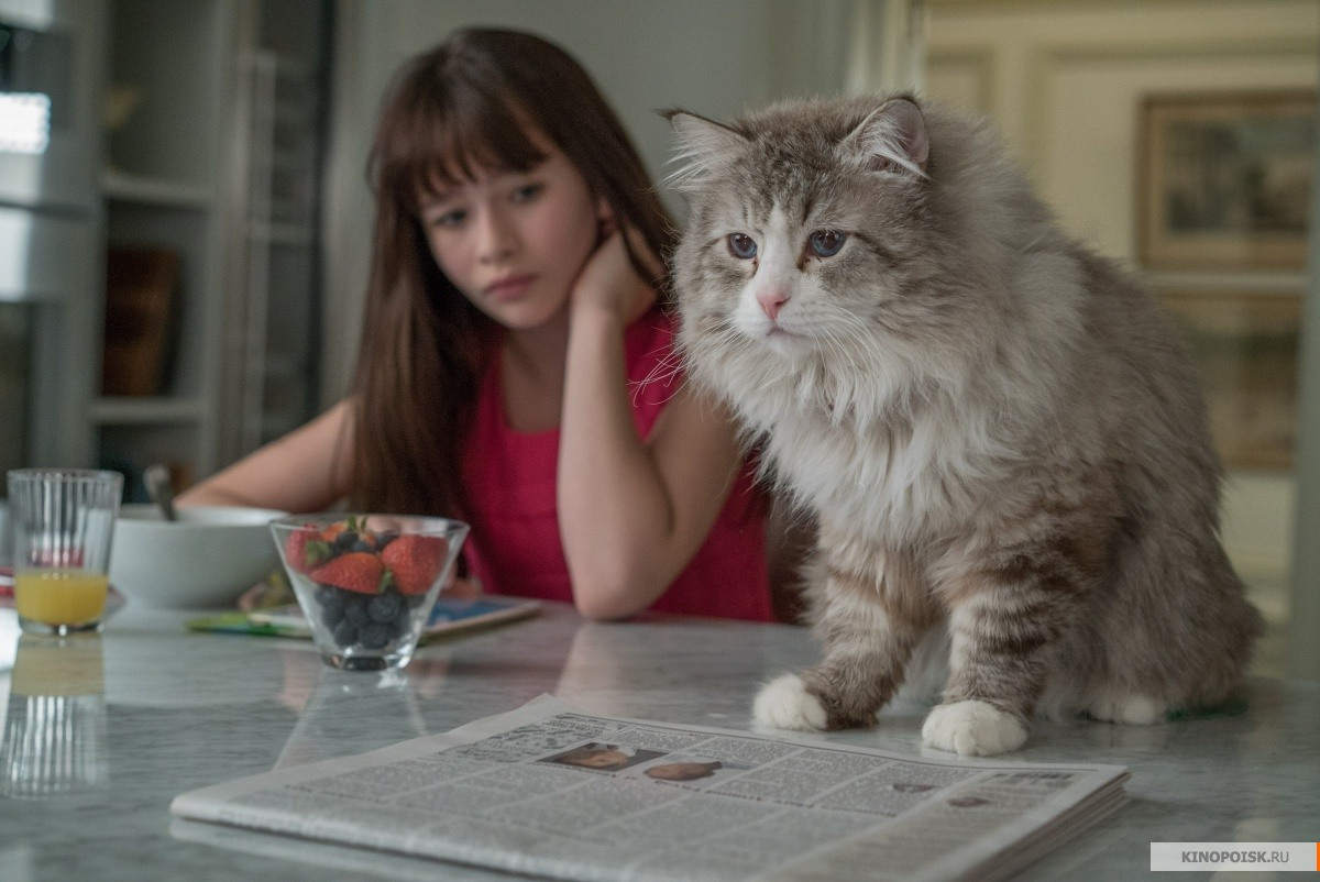 Фото кошек)))))
