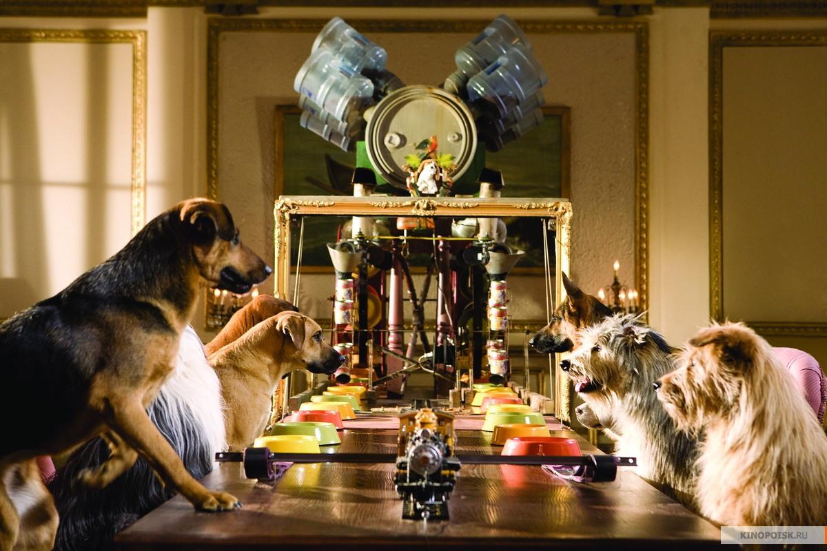 очень картинки отель для собак удивитесь, даже находясь