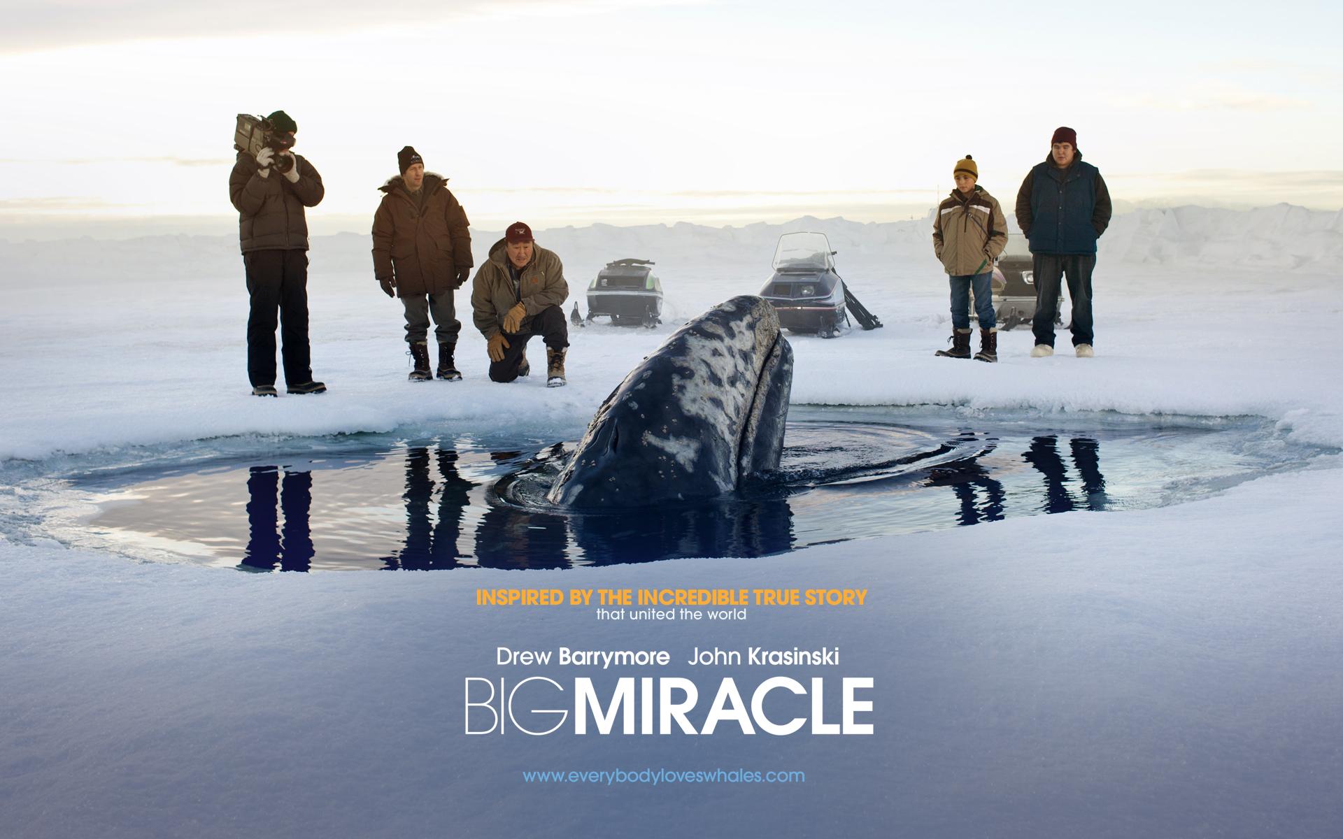 все любят китов смотреть онлайн в хорошем качестве