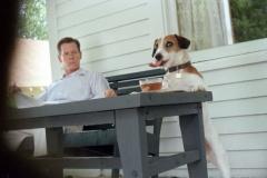 Мой пёс Скип