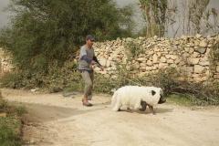 Перелетные свиньи