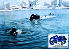 Смерть среди айсбергов