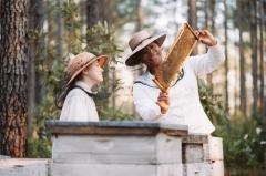 Тайная жизнь пчёл