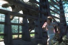 Парк Юрского периода3
