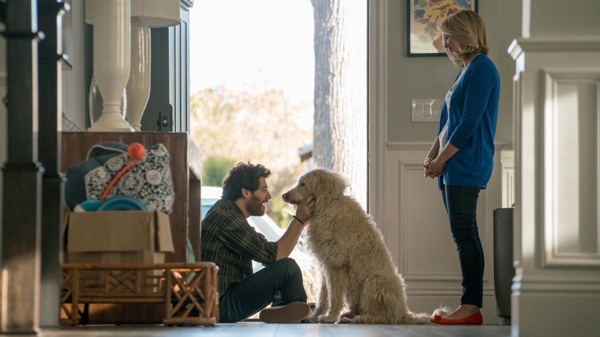 Собачьи дни / Dog Days (2018)
