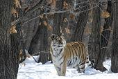 Россия — царство тигров, медведей и вулканов 2011 кадры