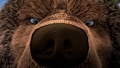 Как приручить медведя 2011 кадры