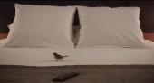 Люди и птицы 2014 кадры