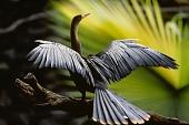 Амазония: Инструкция по выживанию 2013 кадры