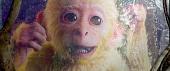Царь обезьян 2014 кадры