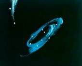 Приключения волшебного глобуса, или Проделки ведьмы 1991 кадры