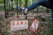Фильм ужасов - Лес призраков смотреть онлайн 2016 кадры